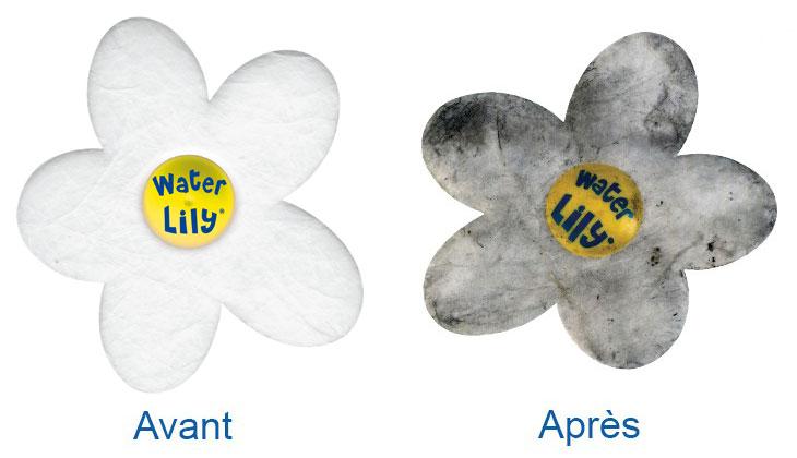 absorbant water lily avant après